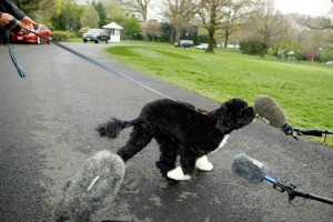 The White House Debuts The Obamas' New Dog Bo, A Portuguese Water Dog