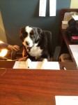 Dog on-the-job training