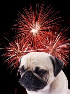 pug fireworks