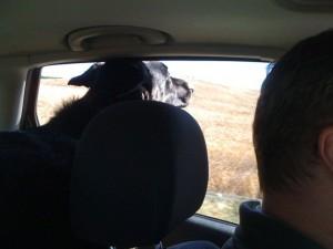 Desi enjoying car ride
