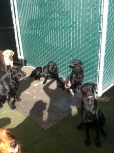 black dog meeting