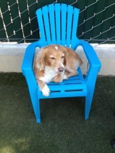 chair stoughton