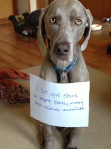 dog shame more funny