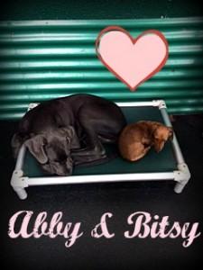 Abby & Bitsy
