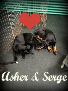 Asher and Serge