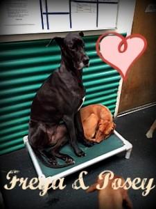 Freya and Posey