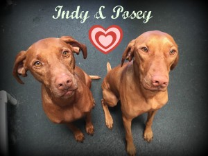 Indy and Posey