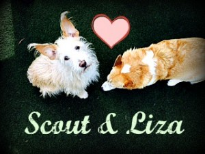 Scout and Liza