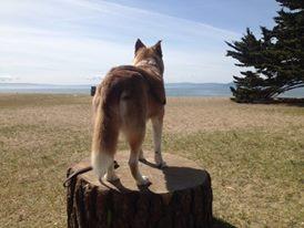 lady stump