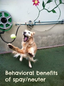 behavioral benefits fancy