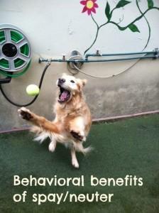 behavioral benefits fancy