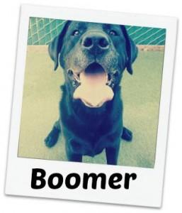 Boomer fancy