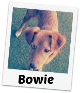 Bowie fancy