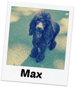 Max fancy