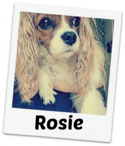 Rosie 2 fancy