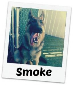 Smoke fancy