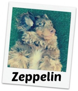 Zeppelin fancy