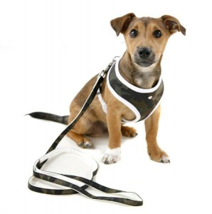 camou-harness