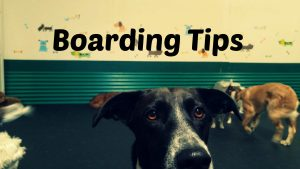 boarding-tips-fancy
